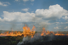 Grass fires can be started accidentally or deliberately, either way they can cause a huge amount of damage