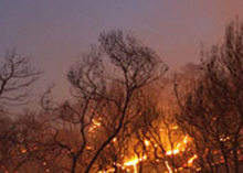 Israeli authorities are currently focused on keeping people out of the fire zone and extinguishing the blaze.