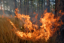 Oklahoma residents have one month left to apply for wildfire disaster aid from FEMA and the U.S. SBA