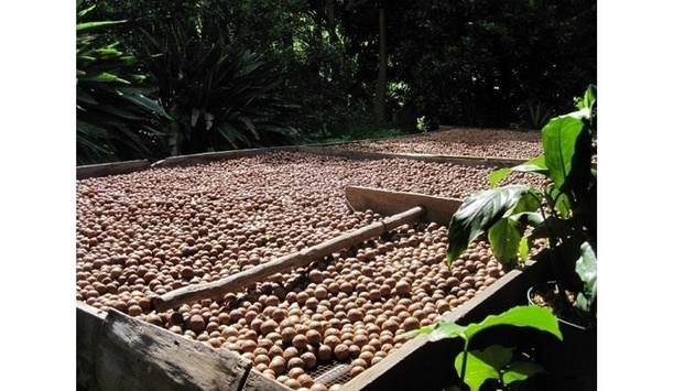 ASP Fire Safeguards Macadamia-Nut Processing Company With Its Smoke Detector