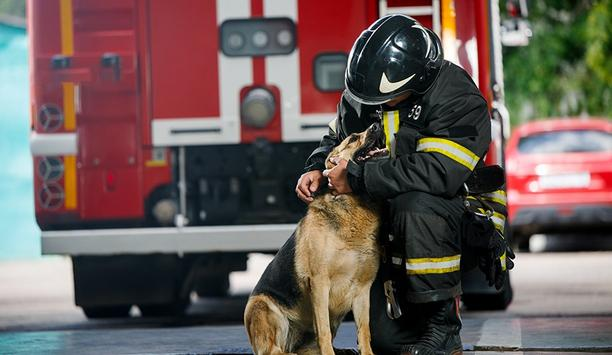 Chicago Bans Dogs From Firehouses, Despite Long-Held Tradition