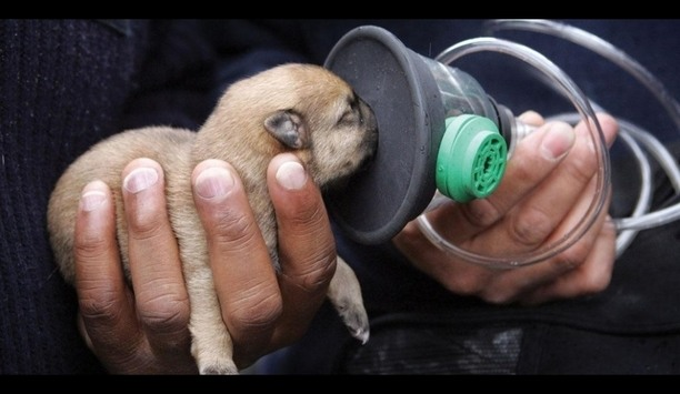 Invisible Fence Brand Donates Life-Saving Pet Oxygen Masks And Shares Fire Safety Tips On National Pet Fire Safety Day
