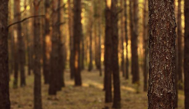 Thinning Forests To Prevent Wildfires Can Yield A Useful Byproduct: Biofuel